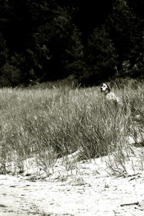 beach-dog-tint