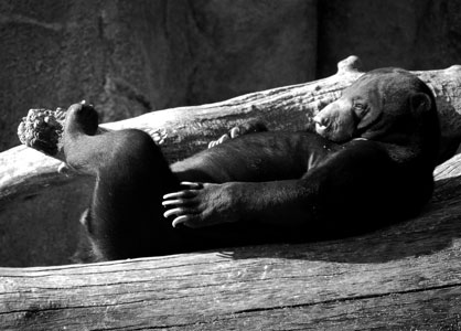 Sleeping-bear