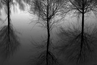 tree_some_quick_b_w_whcc